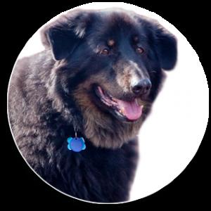 frontdog